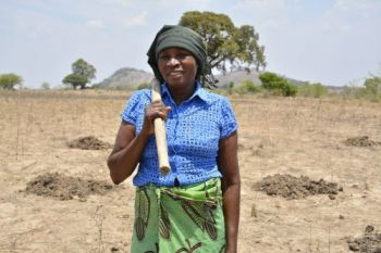 Incentivize smallholder maize farmers, especially women, to take up new DT maize varieties (Demand)