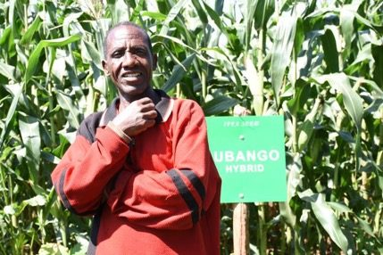 Tanzania seed company increases demand for drought-tolerant maize