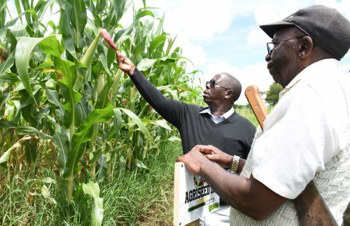 Tanzanian start-up rises to profitable maize business